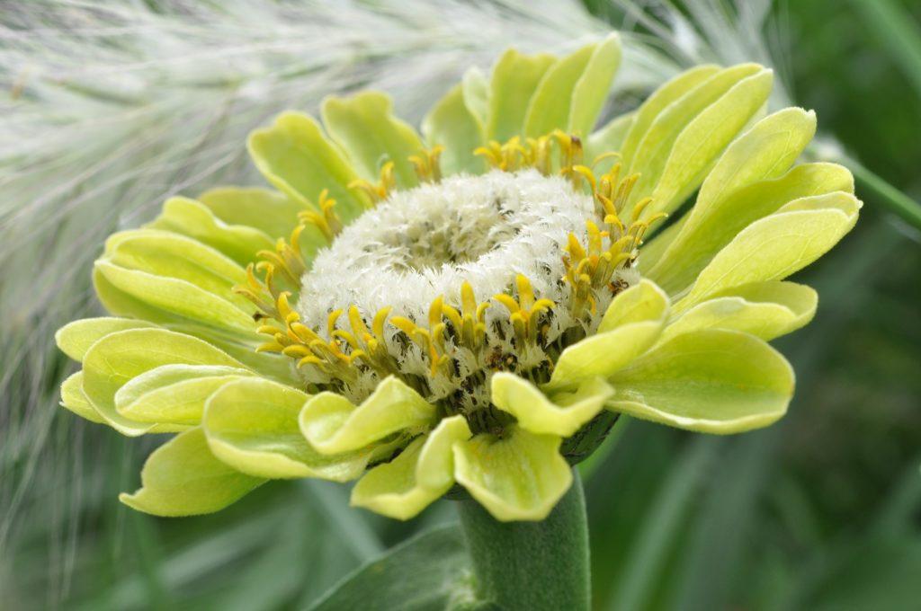 blossom-1586358_1920